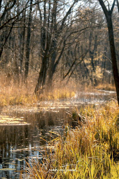 A Walk in the Nature Reserve Aalbeek in Niendorf