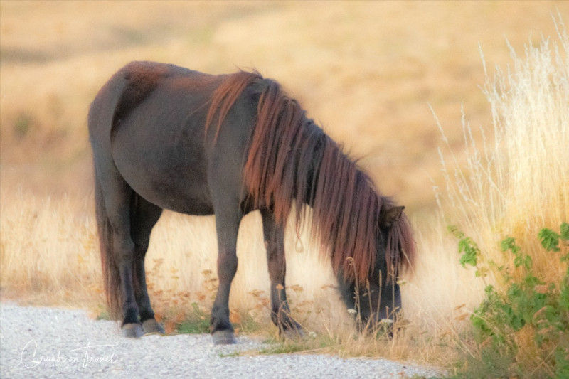 Pony, Photos from Abruzzo region in Italy
