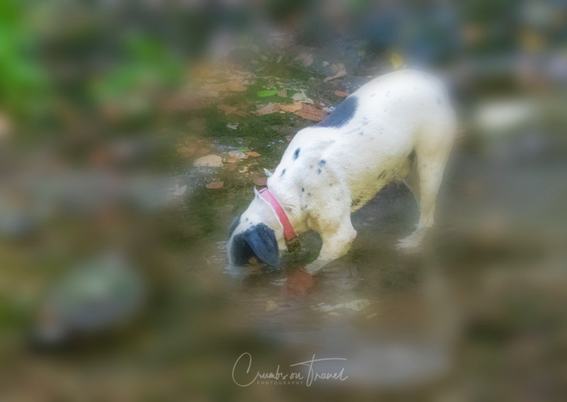 Dog diving, Photos from Abruzzo region in Italy