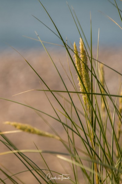 Grass - Beach impressions