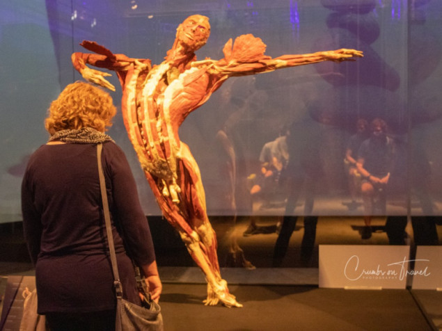 Body Worlds Lübeck/Germany