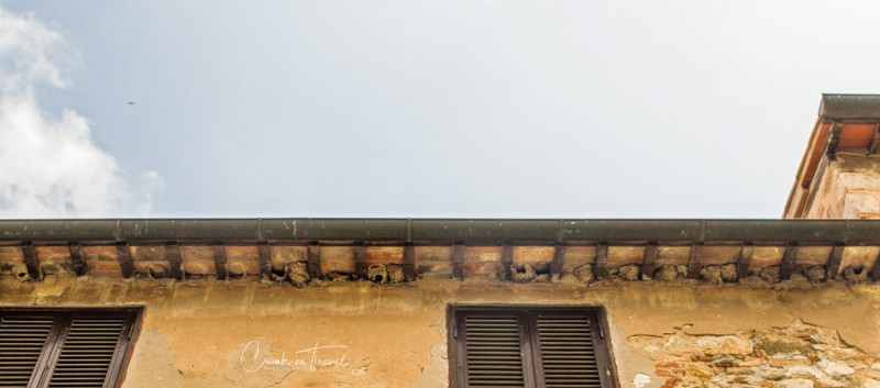 Impressions of Bolgheri in Tuscany/Italy - swallow's nests