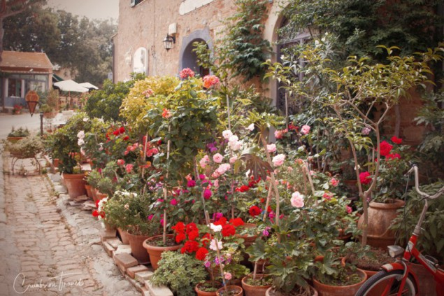 Impressions of Bolgheri in Tuscany/Italy - flowers