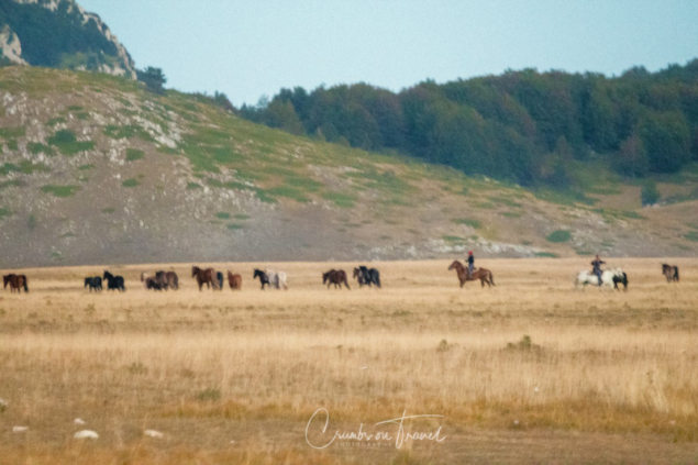 Free horses, The Campo Imperatore High Plateau in the Abruzzo Mountains