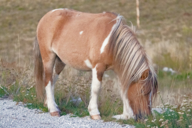 Pony, The Campo Imperatore High Plateau in the Abruzzo Mountains