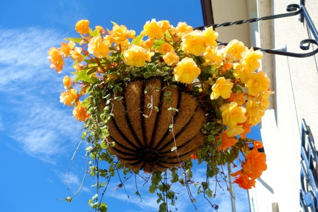 Flowers in Carlingford, County Louth/Ireland