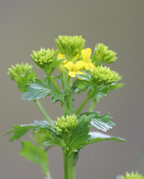 Wild flower, Marche, Italy