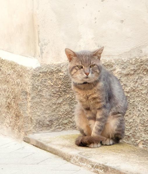 Cat seen in Castilenti in Abruzzo