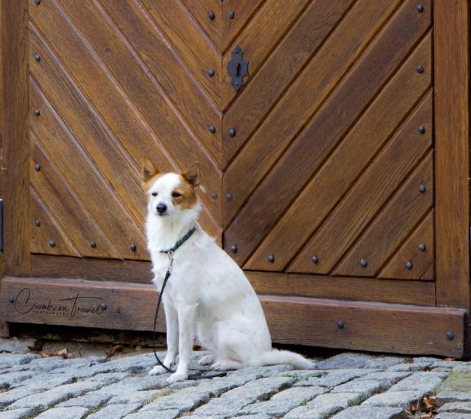 Dog, Český Krumlov