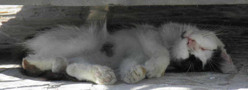 Sleeping cat in Corfu