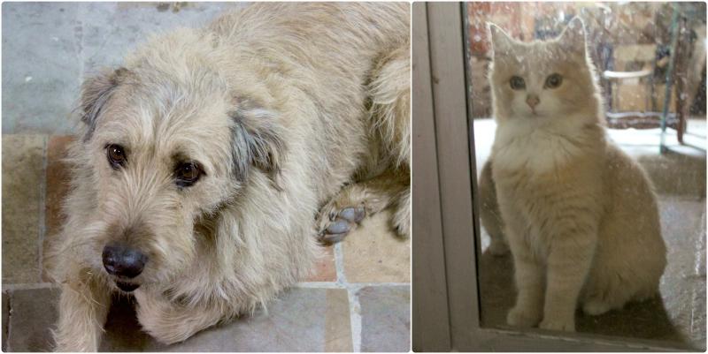 Pets at b&b Valdericarte, Le Marche/Italy