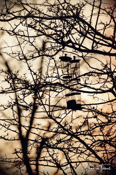 Bird-feeders in Husum