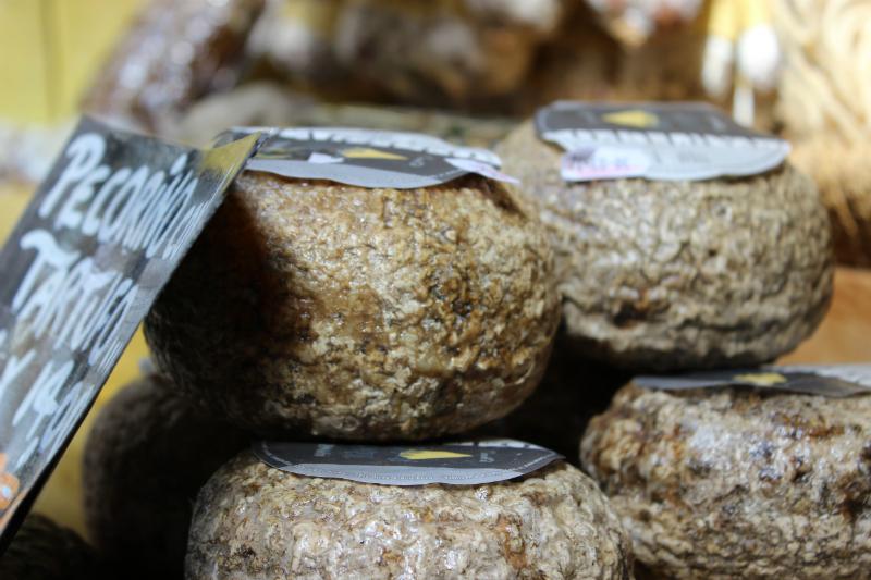 Goat cheese Pecorino