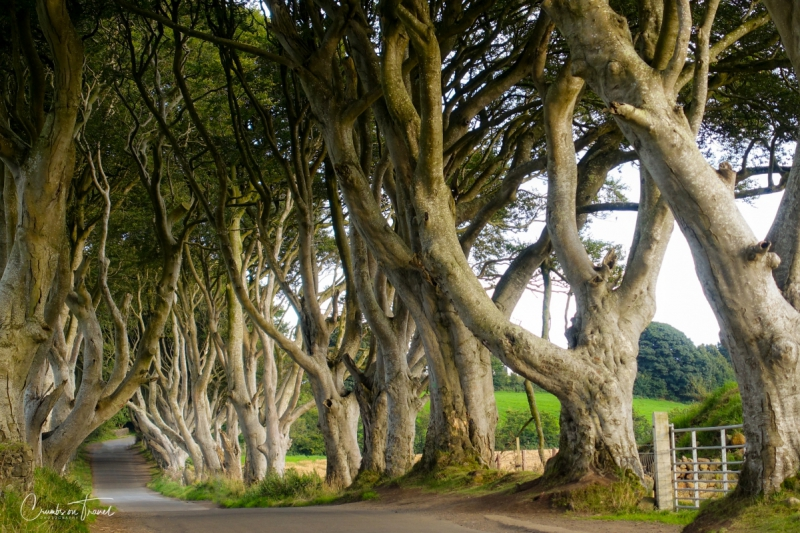 Dark Hedges, Ballymoney, Northern Ireland