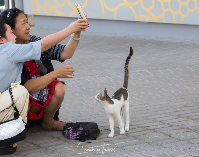 Tourists and local (cat)