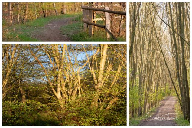 At the Nature Reserve of Dummersdorfer Ufer/Lübeck