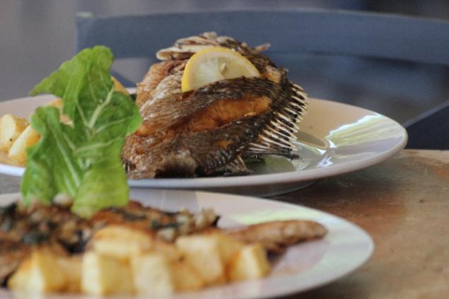 Tilapia fish, Jordan