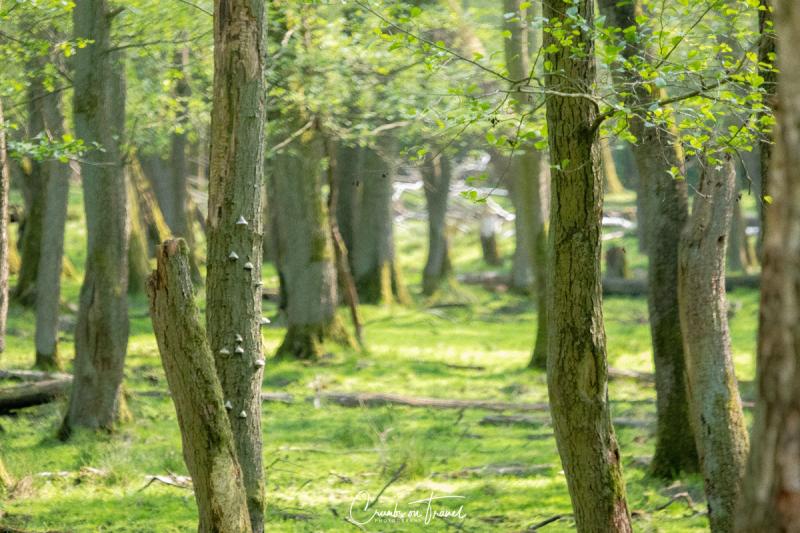 Nature Park Eekholt
