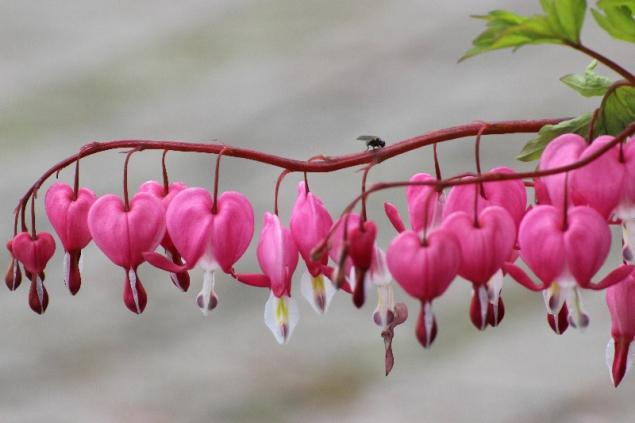 Flowers in Frohnleiten, Styria, Austria