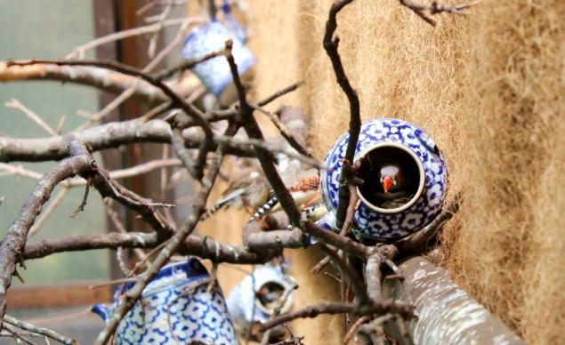 Nesting birds in teapots, Giardini La Mortella, Forio d'Ischia, Campagna/Italy