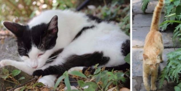 Cats, Giardini La Mortella, Forio d'Ischia, Campagna/Italy
