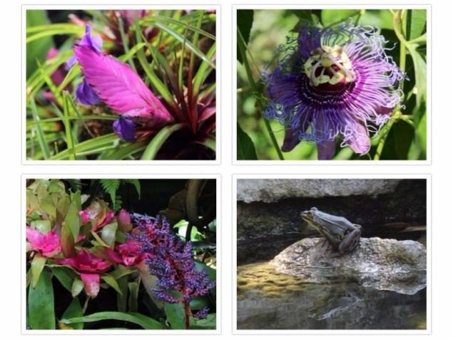 Flowers, Giardini La Mortella, Forio d'Ischia, Campagna/Italy