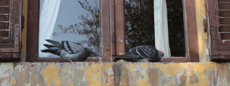 Birds, Gradara, Marche, Italy
