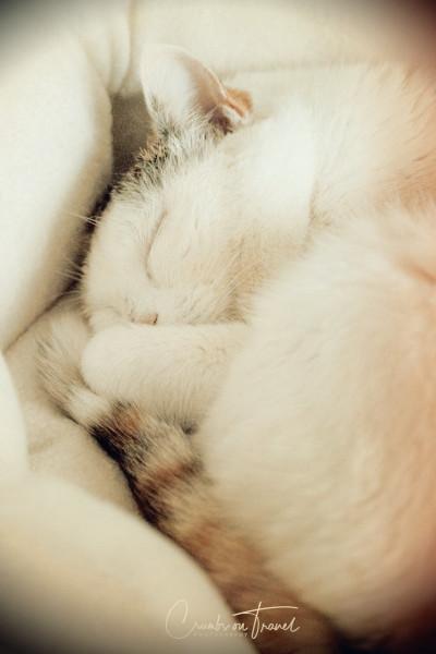 Sleeping Beauty - my little girl
