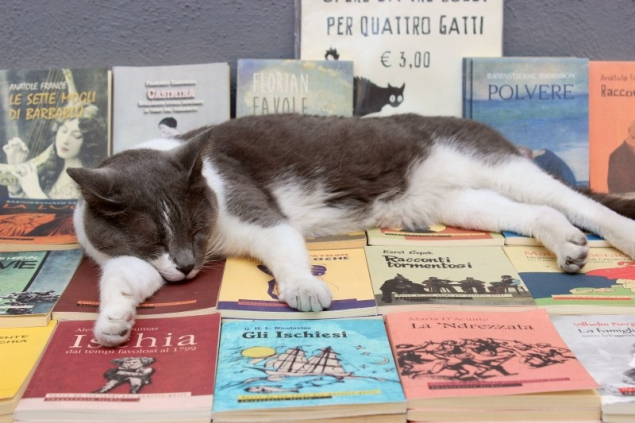 Cat on books seen in Ischia Ponte, Campagna/Italy