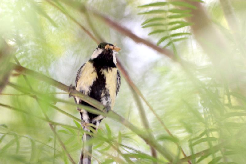 Bird, Jordan