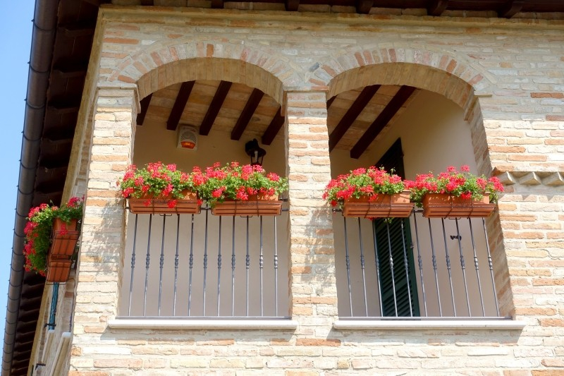 Flowers at Novilara, Le Marche/Italy
