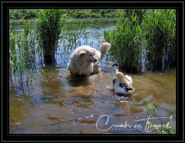 dog and dug