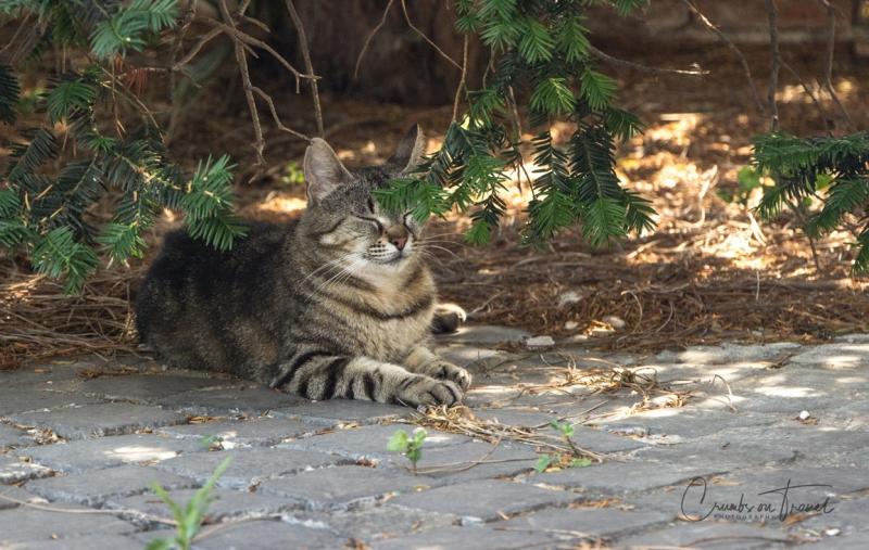Cat, Museo Ostiense, Ostia Antica, Lazio/Italy