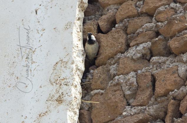 Inhabitant, Ostia Antica, Lazio/Italy