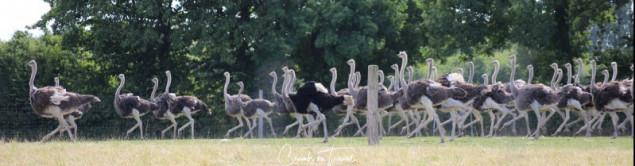 At the Ostriche Farm OstseeBlick