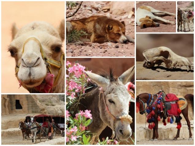 Animals, Petra, Jordan