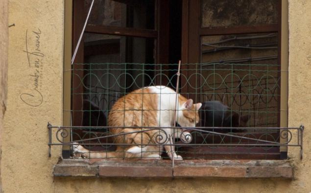Cat in Pienza/Tuscany
