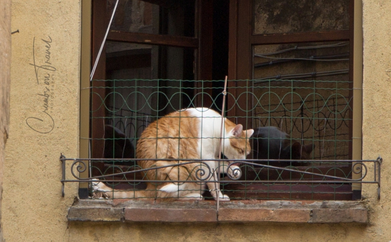 Cat in Pienza/Tuscany