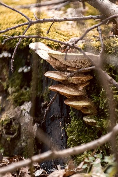 Tree mushrooms