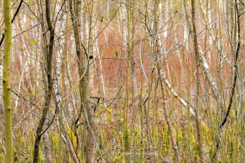 Pöppendorfer forest