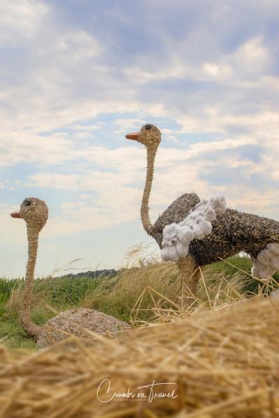 Ostriches - Strawfigures at the Probsteier Grain Days