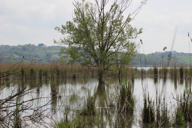 Protected area Montepulciano Lake, Tuscany, Italy
