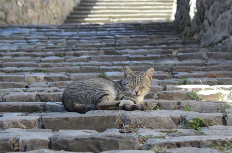 Cat, Sant'Agata Feltria, Emiglia-Romagna/Italy