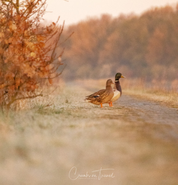 An early morning walk in the nature reserve Schellbruch near Lübeck
