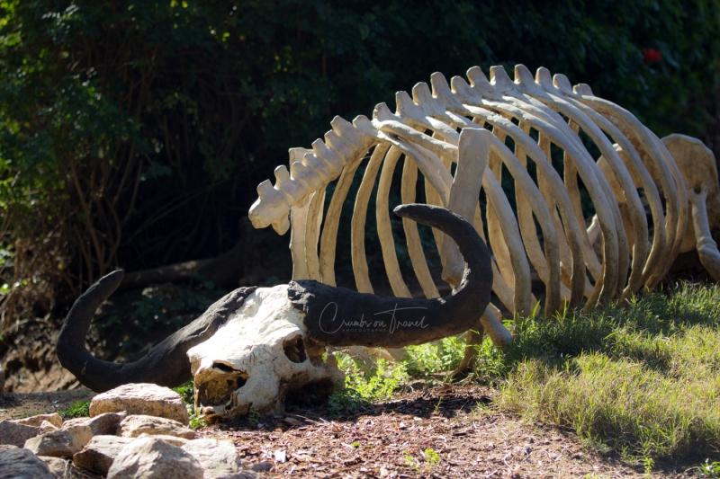 San Diego Zoo Safari Park, California/USA