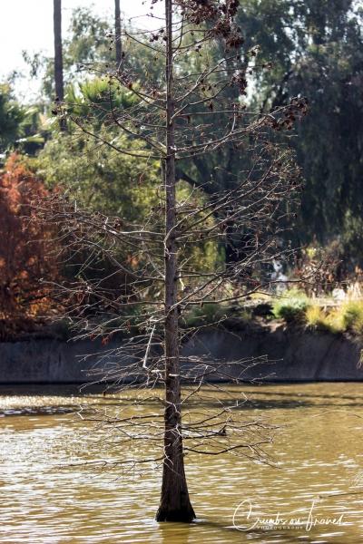 San Diego Zoo Safari Park - Tree in pond