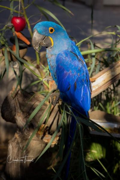 San Diego Zoo Safari Park - Macaw