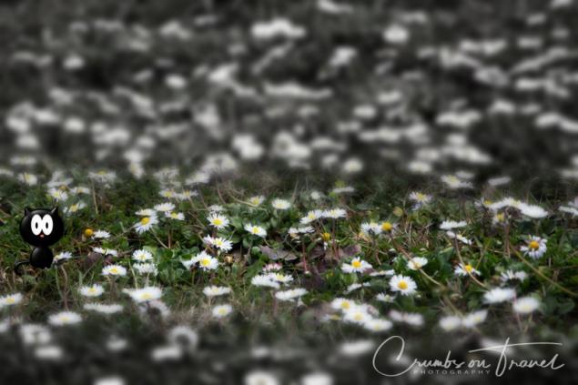 Spring flowers Daisies