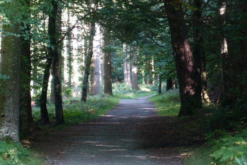 Tollymore Forest Park, Newcastle, County Down/Northern Ireland