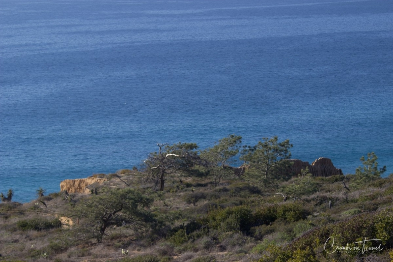Torrey Pines State Natural Reserve, California/USA